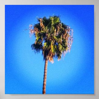 Palm Tree Blue Sky Poster