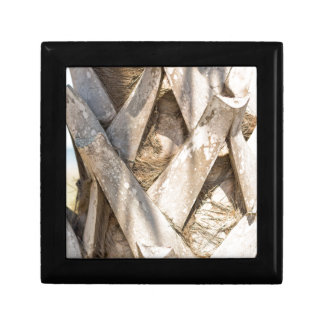 Palm Tree Close Up Detail Abstract Tight Crop Gift Box