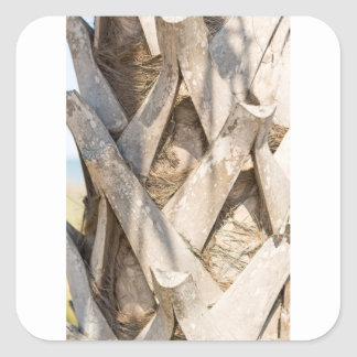 Palm Tree Close Up Detail Abstract Tight Crop Square Sticker