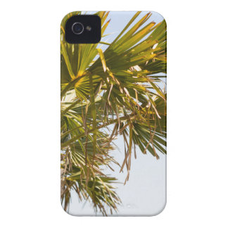 Palm Tree from the East Coast famous Myrtle Beach Case-Mate iPhone 4 Case
