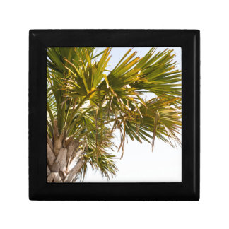 Palm Tree from the East Coast famous Myrtle Beach Gift Box