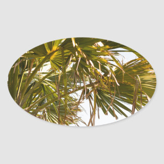 Palm Tree from the East Coast famous Myrtle Beach Oval Sticker