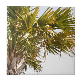 Palm Tree from the East Coast famous Myrtle Beach Tile