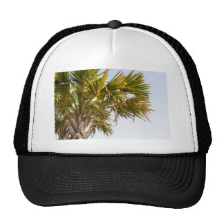 Palm Tree from the East Coast famous Myrtle Beach Trucker Hat