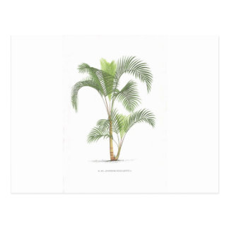 Palm tree illustration collection postcard