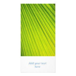 Palm tree leaf background photo greeting card