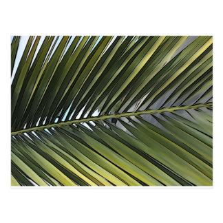 Palm Tree Leaf Postcard