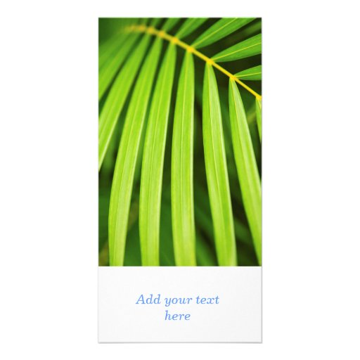 Palm tree leaves personalized photo card