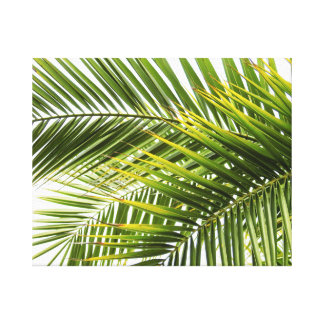 Palm tree leaves tropical summer photo canvas print