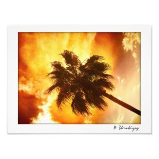 Palm Tree New Orleans Louisiana Photo Print
