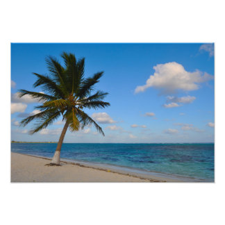 Palm Tree on a Beach Photo Print
