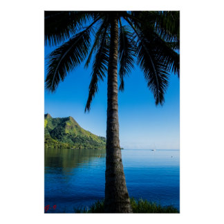Palm Tree Over Cooks Bay Poster