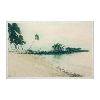 Palm Tree Peninsula at Smathers Beach, Key West FL Acrylic Wall Art