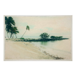 Palm Tree Peninsula at Smathers Beach, Key West FL Poster