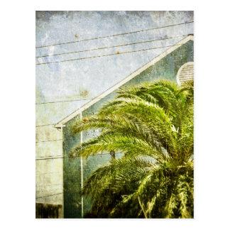 Palm Tree :) Postcard