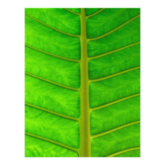 Palm Tree Print Letterhead