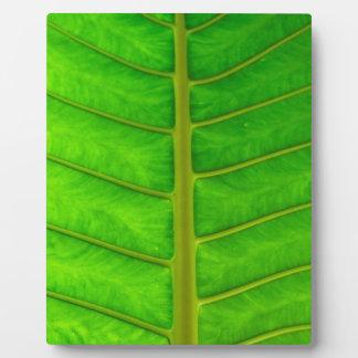 Palm Tree Print Plaque