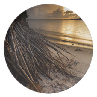 Palm Tree Roots at Sunset Plate