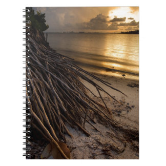 Palm Tree Roots at Sunset Spiral Notebook