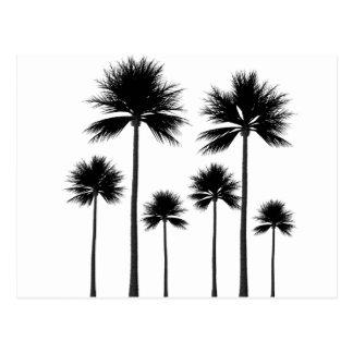 Palm Tree Silhouette Postcard