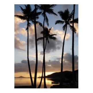 Palm Tree Silhouettes in Hawaii Postcard