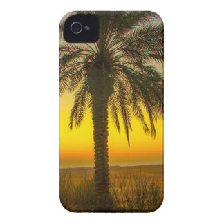 Palm Tree Sunrise iPhone 4 Cases