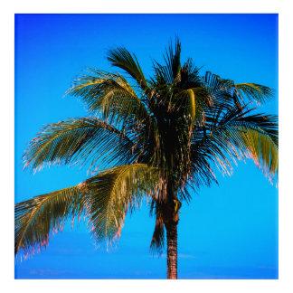 Palm Tree Top Acrylic Wall Art