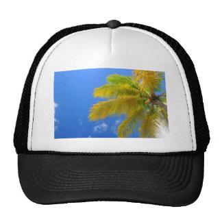 Palm tree trucker hat