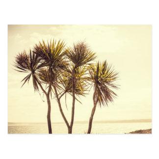 Palm trees at St. Ives Cornwall Postcard