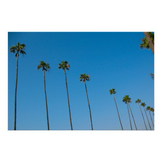 Palm Trees in a Row Poster