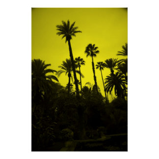 Palm Trees of Morocco Poster