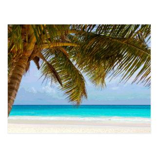 Palm Trees on Beach Blue Sea & Sky Postcard