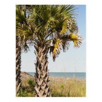 Palm Trees on Myrtle Beach East Coast Boardwalk Postcard