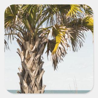 Palm Trees on Myrtle Beach East Coast Boardwalk Square Sticker