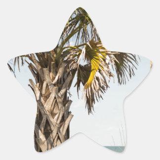 Palm Trees on Myrtle Beach East Coast Boardwalk Star Sticker