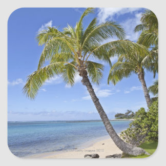 Palm trees on the beach in Hawaii. Square Sticker