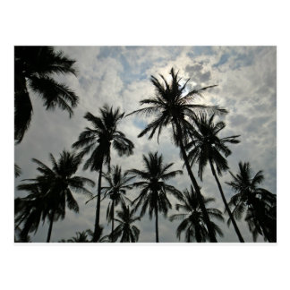 Palm Trees over Mexico Postcard