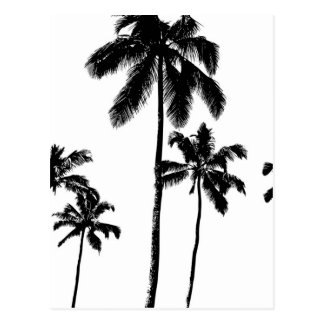 Palm Trees Postcard