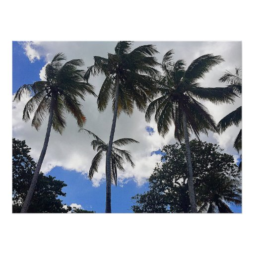 palm tree's poster