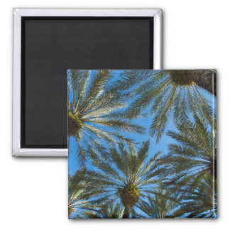 Palm Trees Umbrella Magnet