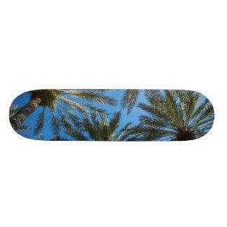 Palm Trees Umbrella Skateboard Decks