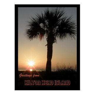 Palmetto at Dawn Postcard