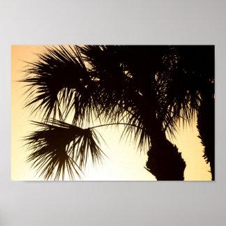 Palmetto tree, sunrise, Florida Poster