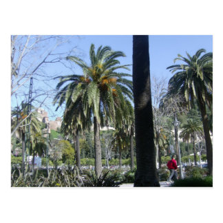 Palms in Malaga Postcard