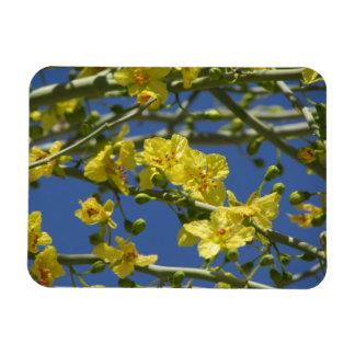 Palo Verde Blooms Magnet