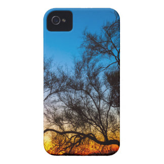 Palo Verde Tree Silhouette Sunrise iPhone 4 Cases