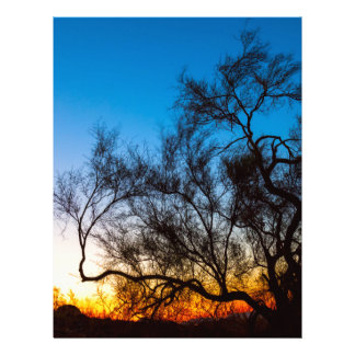 Palo Verde Tree Silhouette Sunrise Letterhead