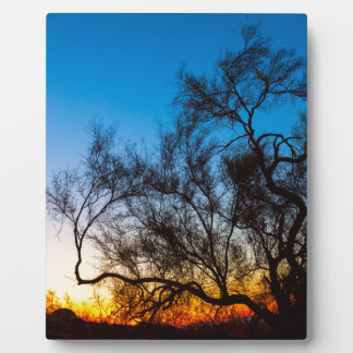 Palo Verde Tree Silhouette Sunrise Plaque