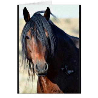 Palomino Butte Mustang Card