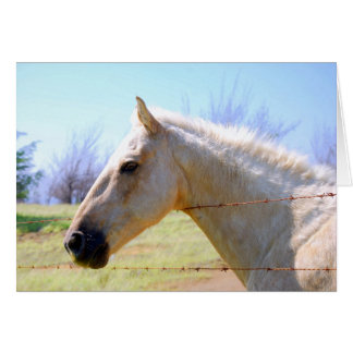 Palomino Horse at Fence Card